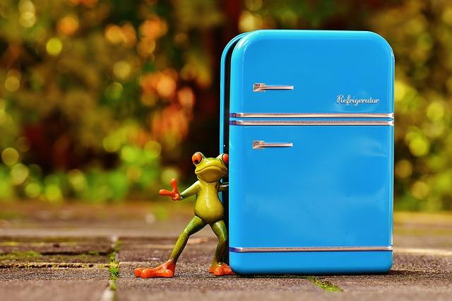 frog-1729802_640