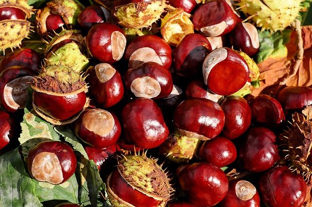 chestnut-1710430_640